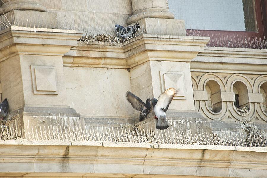 Problém s holubmi